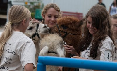 Three girls with alpacas