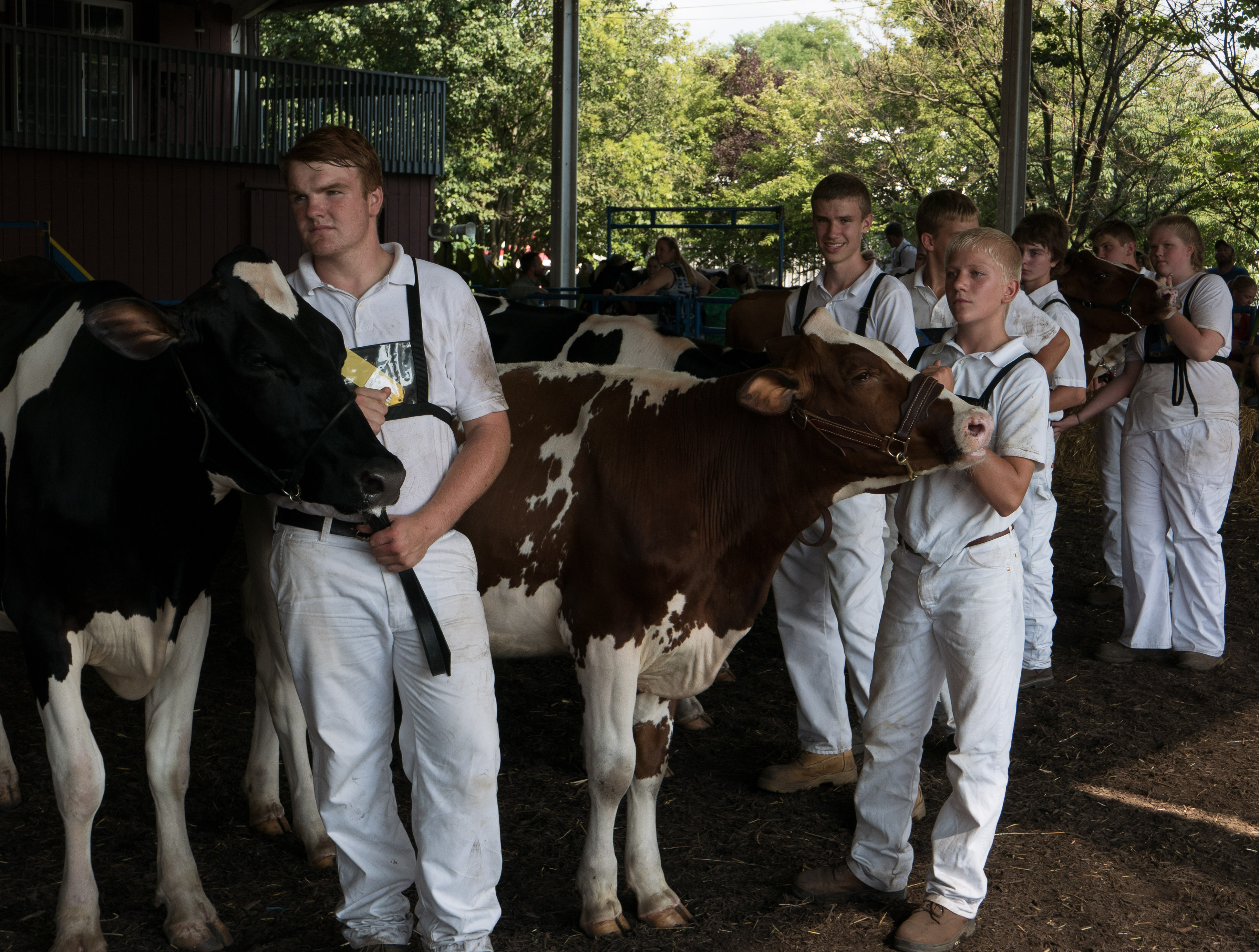 Dairy club members showing at Fair