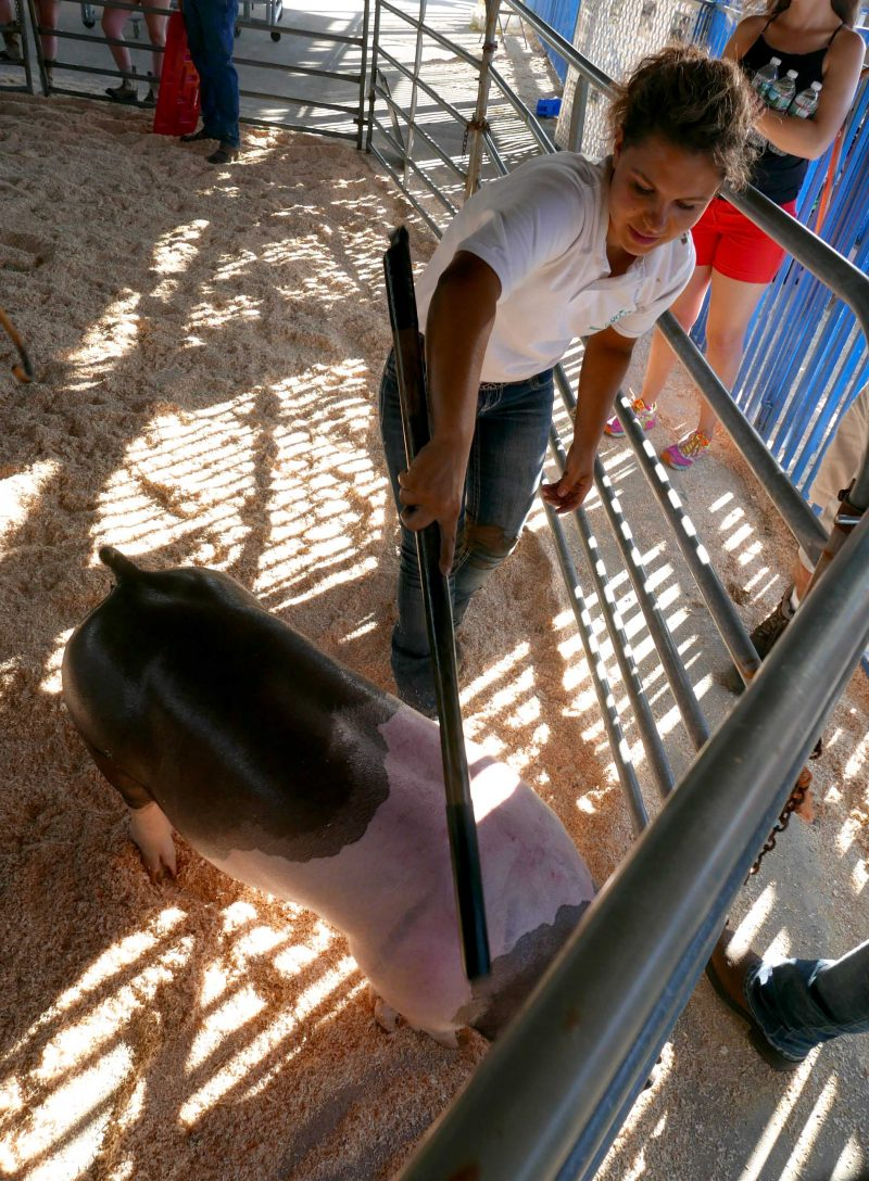 Girl showing pig at the fair
