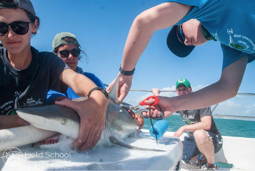 Youth tagging a shark